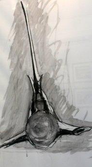 Whale Vertebrae